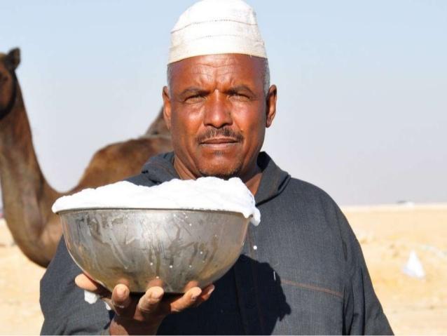 camel-milk-dairy