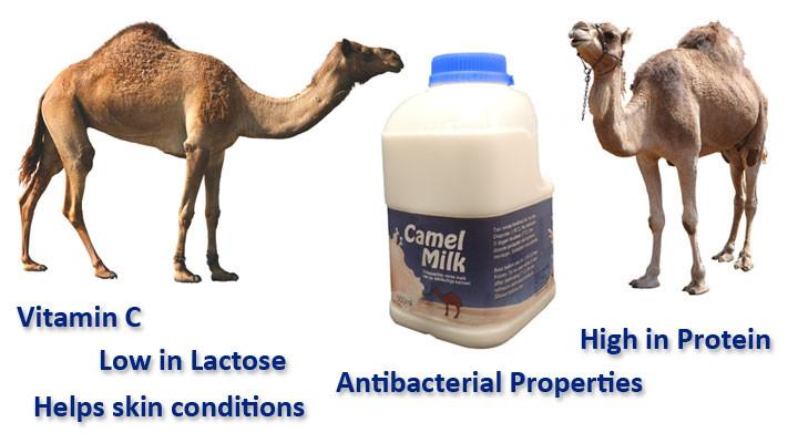 camelmilk01