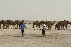 camel-bir3