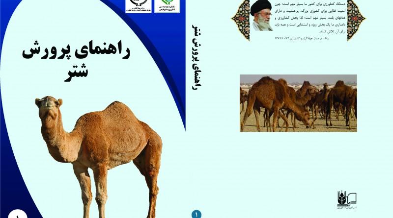 camel final