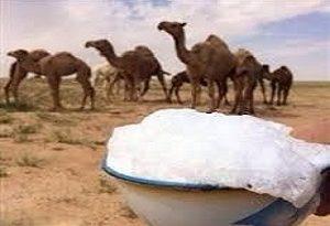 معاون سلامت دامپزشکی خراسان جنوبی گفت: تاثیر شگفت انگیز شیر شتر بر کبد چرب