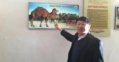 ایجاد فرصت تجاری در شیر شتر قزاقستان توسط تاجر چینی