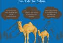 چرا شیر شتر در بهبودی موارد اوتیسم مفید است؟